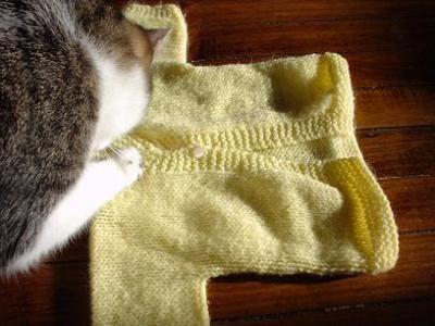 yellow sweater + cat