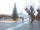 Dérive - Christmas Tree