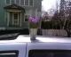 zeee plant on my car.