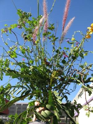 Tramp bouquet