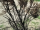 Charred tree