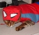 Spiderw-Kitty