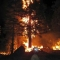 fire in the tree-ant#10004.jpg