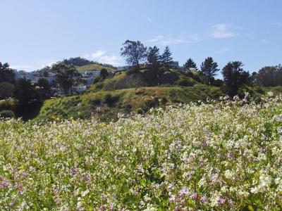 my hilltop