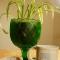 Wine goblet as plant holder!