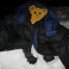 help im a bear