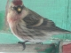 Like the bird
