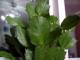 leaves grow