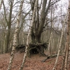 Decathlon in a Tree