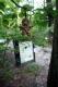 gwynnsfalls_tree.jpg