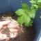 plants need tending 3.