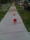 I got back on the sidewalk