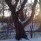 tree seven