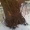 tree seven hollow