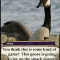 SF0 Goose.jpg