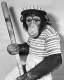 Monkeys have been baseball fans since the way back times.