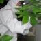 Katabasis by rongo rongo, bunny dragon