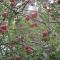 Fruit Invasion by rongo rongo
