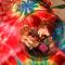 Fairies in a bowl