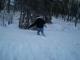 Knee-deep snow....>.