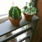 papercraft plants