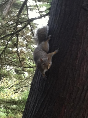 This squirrel is suspicious of unseasonal activities.