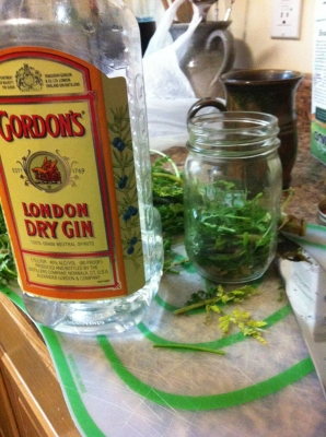 Steeping the chopped root and leaves.