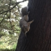This squirrel is suspicious of unseasonal activities.