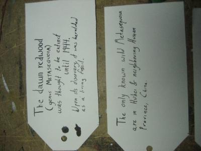 cards3&4.JPG