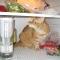 cat in fridge 5