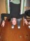 oops i'm upsidedown!