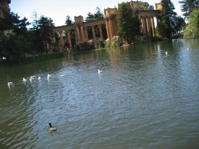 star5 - ducks & pond