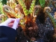celina - fun textured plant
