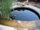 Forbidden Pool