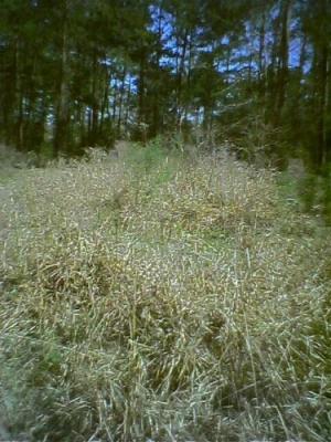 forest 2.jpg