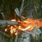 firepit 5.jpg