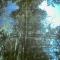 forest 8.jpg