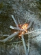 firepit 4.jpg