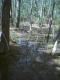 forest 5.jpg