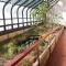 prairie greenhouse